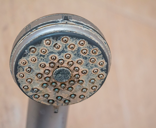 Shower Head Buildup